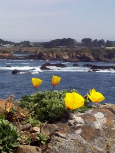 Ocean bluffs at MENDOCINO COAST BOTANICAL GARDENS in Fort Bragg, CA