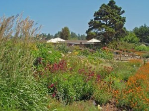 Perrenial Garden at MENDOCINO COAST BOTANICAL GARDENS in Fort Bragg, CA