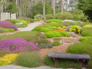Heathers at MENDOCINO COAST BOTANICAL GARDENS in Fort Bragg, CA
