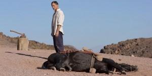 Viggo Mortensen stars as Daru in Tribeca Film's Far from Men (2015)