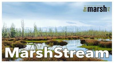 Post image for Theater Preview: MARSHSTREAM (The Marsh San Francisco)